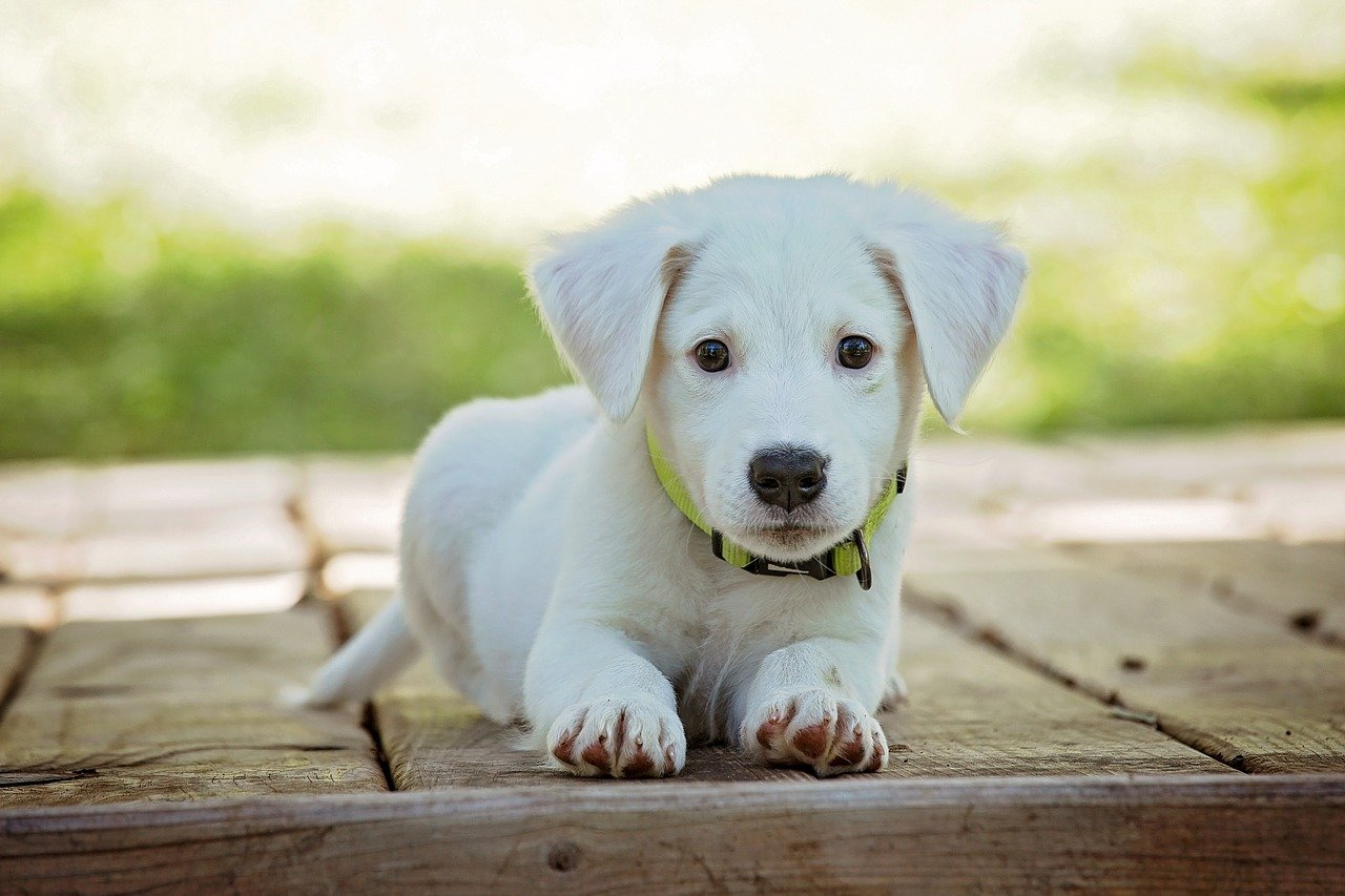 Learn The Methods Of How Your Puppy Can Socialize Around